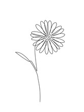 Chamomile Continuos Line Drawing. Black Simple Hand Drawn. Abstract Floral Linear