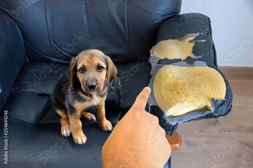 Fotografie, Obraz  that is not done, bad doggie