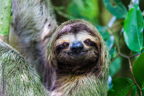 Stampa su Tela  sloth, Manuel Antonio National Park, Costa Rica, Central America