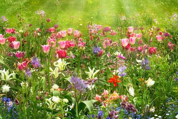 Fototapeta Ogrody frühlingsblumen im garten