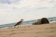 Chaika. Log. Sandy Beach. Sea.