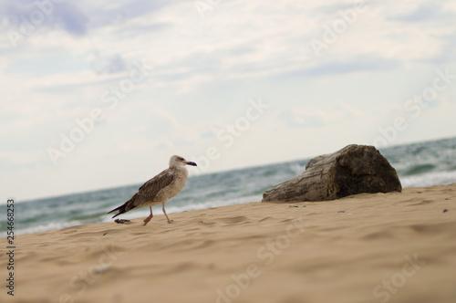 Fotografia, Obraz  Chaika. Log. Sandy beach. Sea.