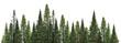 dark green straight pine trees on white