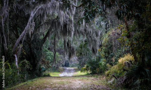 Wall Murals Khaki Southern trees with Spanish Moss
