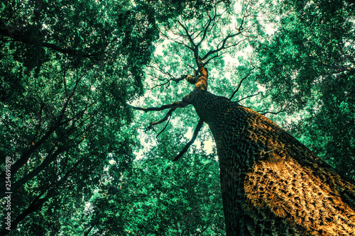 Fototapeten Wald a spring forest trees. nature wood sunlight backgrounds.