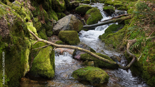 Aluminium Prints Forest river black forest water fall with moss covered rocks