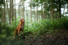 Dog In The Forest, Walk With A...