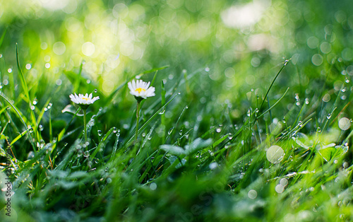 Canvas Print Small drops of dew on fresh green grass in the morning