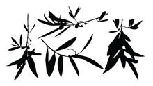 Gałązka Oliwna Ilustracja Sylwetka