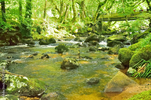 Aluminium Prints Forest river Rivers and Lakes.