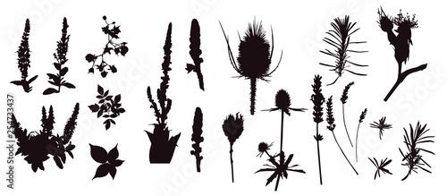 Zioła, dziewanna, szczeć, oset, malina, jerzyna, szałwia, lawenda, dzika róża,  - 254733437