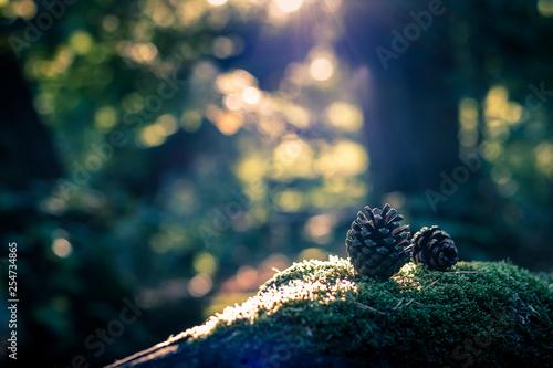 Au milieu de la forêt Fototapet