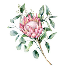 Watercolor Protea Bouquet With...