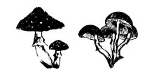 Hand Drawn Poisonous Mushrooms...