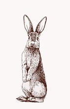 Graphical Vintage Bunny, Retro Illustration,sketch
