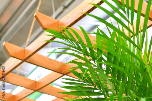 Photo Areca palm tree in interior