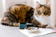 Calico Cat With Green Eyes Sits Next To Gift Box And Ring