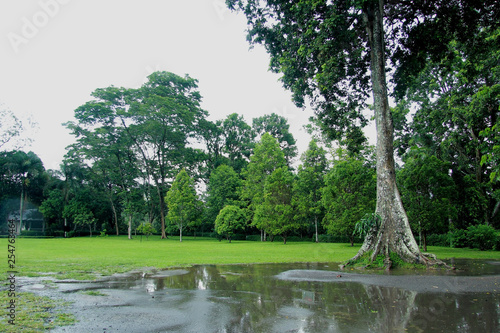 Fotografia, Obraz  stagnant water in a park with large trees