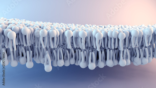 Pinturas sobre lienzo  Cell Membrane structure in motion