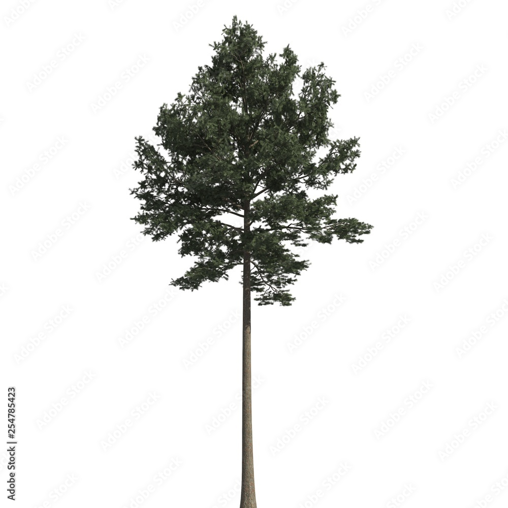 Fototapety, obrazy: Pine tree 3d illustration isolated on the white background