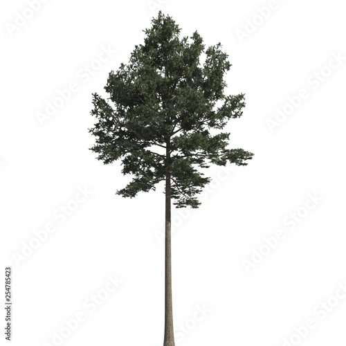 Fotografie, Obraz  Pine tree 3d illustration isolated on the white background