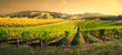 canvas print picture - Vineyard Light