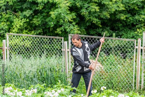 Man farmer in garden cutting weeds oat grass with sickle