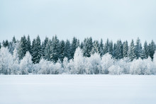 Snowy Countryside And Forest I...
