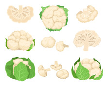 Cauliflower Set. Organic Food Concept. Vector Illustration.