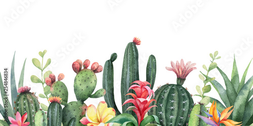 Fotografía  Watercolor vector banner tropical flowers and cacti isolated on white background