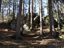 Kraftplatz Im Wald Mit Großen...