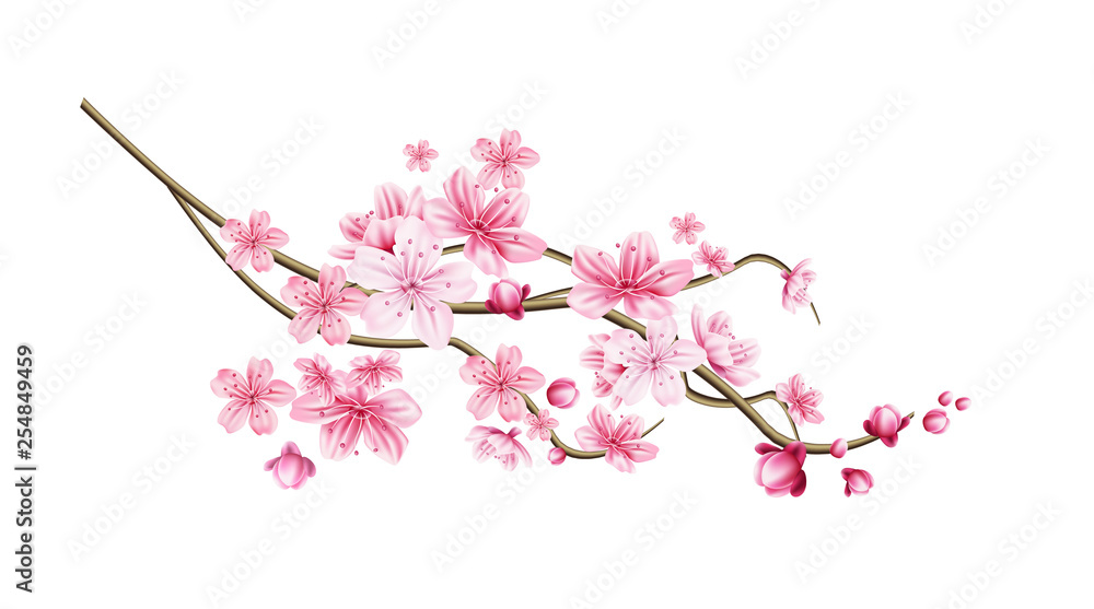 Fototapety, obrazy: Vector realistic sakura tree twig with pink petal