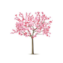 Vector Realistic Sakura Tree With Pink Petal
