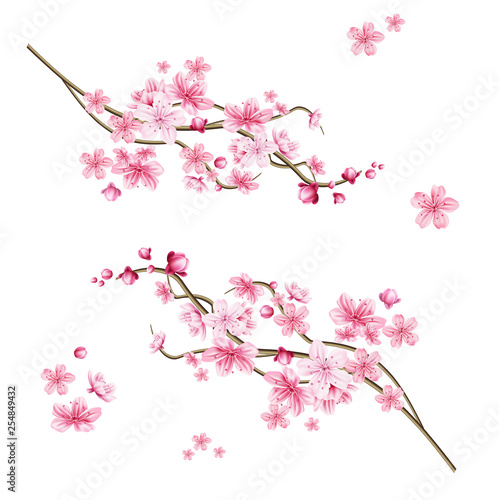 Vector realistic sakura tree with pink petal Wall mural