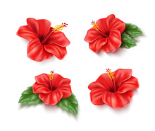 Vector Red Hibiscus Realistic ...