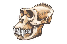 Gorilla Monkey Skull Vector