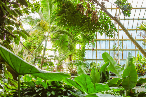 Tropical Greenhouse Glasshouse Sunny Interior Full Of Natural Lush