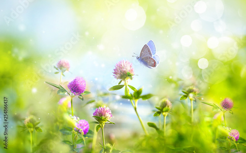 Poster Vlinder Wild flowers of clover and butterfly in a meadow in nature in rays of sunlight in summer in spring close-up of a macro. A picturesque colorful artistic image with a soft focus.