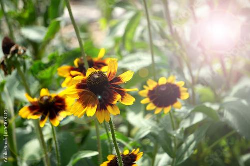 Fotografering  Image Of The Flower golden jerusalem head macro,
