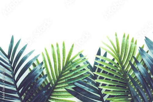 tropikalne-liscie-lisci-roslin-z-bliska-z-bialym-tle-kopia-przestrzen-natura-i-lato-pojec-pomyslow