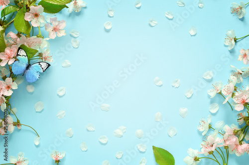 Foto op Plexiglas Bloemenwinkel Beautiful spring nature background with butterfly, lovely blossom, petal a on turquoise blue background , top view, frame. Springtime concept.