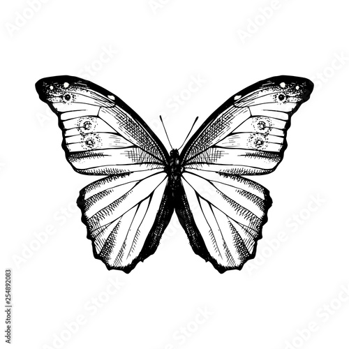 Fotografia, Obraz Hand drawn Blue Morpho butterfly