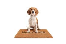Cute Beagle Dog Sitting On A B...