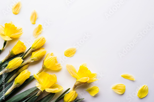 Photographie  Yellow daffodils flowers on a white background. Copy space.