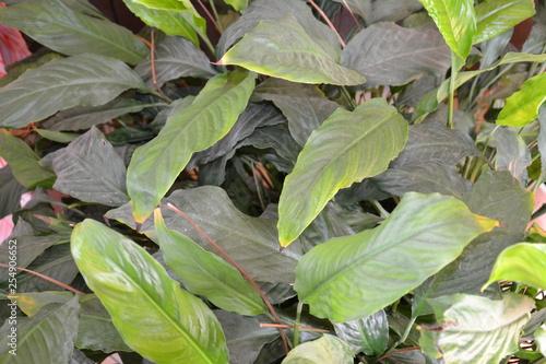 Poster Chamaleon Blume Pflanze Natur