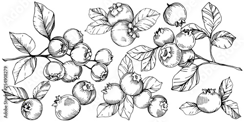 Vector Blueberry black and white engraved ink art Tapéta, Fotótapéta