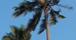 A Look at the Palm Tree at Dawn.