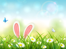 Blue Nature Background With Rabbit Ears In Grass