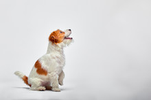 Little Dog At Studio Looking U...