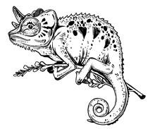 Chameleon Lizard On A Tree Bra...